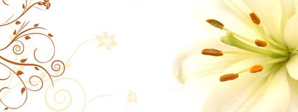 Lily banner Stock Photo