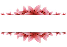 Lily Banner Royalty Free Stock Image