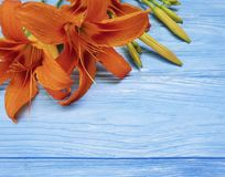 Lily beautiful orange holiday summer seasonal decoration a blue wooden vintage communion. Lily orange  beautiful a blue wooden background seasonal bouquet Stock Image