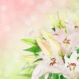 lily białe kwiaty obraz royalty free