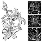 Lily. Black and white  illustration. Can be greeting card Royalty Free Stock Photos
