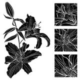 Lily. Black and white  illustration. Can be greeting card Stock Image