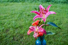 Lily blooming in glass bottle. A colleague received a bunch of flowers. A few days later, when some of the flowers withered, she cleaned the lilies in full bloom Royalty Free Stock Image