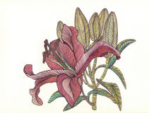 Lily blooms with petals , flower , drawn by bright colorful penc Royalty Free Stock Image