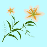 Lily on blue Stock Image