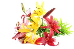 Lily Bouquet Royalty Free Stock Image