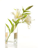 Lily  bouquet Royalty Free Stock Images