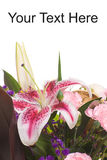 Lily Bouquet. Closeup view of a lily bouquet with white copyspace above Royalty Free Stock Images