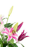 Lily bouquet isolated on white Royalty Free Stock Photo