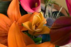 Lily Bud gialla in mazzo Fotografie Stock