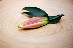 Lily bud on a wooden plate. Lily bud on round plate Stock Photos