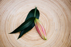 Lily bud on a wooden plate. Top view of lily bud on a plate Stock Photography