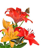 Lily with butterflies Royalty Free Stock Photography