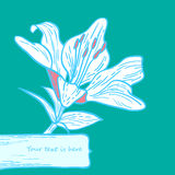 Lily card. White Lily flower gift card Royalty Free Illustration