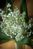 lily charakteru rosyjski nieznane doliny świat Zdjęcie Stock