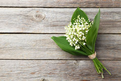 lily charakteru rosyjski nieznane doliny świat Fotografia Royalty Free