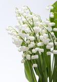 lily charakteru rosyjski nieznane doliny świat Fotografia Stock
