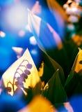 lily charakteru rosyjski nieznane doliny świat cień Zdjęcie Stock