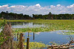 Lily covered scenic lake Stock Photo