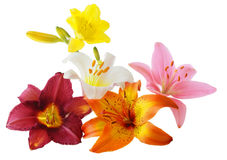 Lily and daylily. Flowers isolated on white Stock Photo