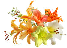 Lily and daylily. Flowers isolated on white background Royalty Free Stock Images