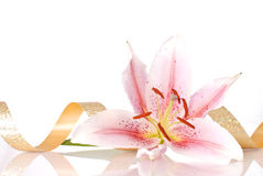 Lily Decor Royalty Free Stock Photos