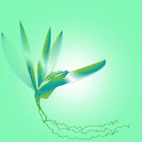 Lily Design. Water lily illustration I made in green light water with a trail of roots floating royalty free illustration