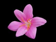 lily deszcz Obraz Royalty Free