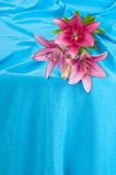 Lily and drapery. Royalty Free Stock Images