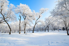 The lily fairy tale world in the winter. The photo was taken in forest park  Daqing city Heilongjiang province,China Stock Image