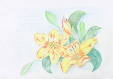 Lily. Figure lily colored watercolor pencils Royalty Free Stock Photos