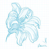 Lily flower Royalty Free Stock Image