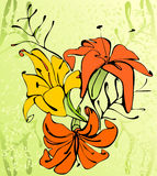 Lily, flower. Retro style spring flower background Stock Images