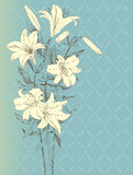 Lily flower. Vintage background with lily flower Stock Photography