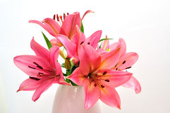 Free Lily Flower. Stock Photography - 25468742