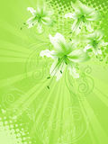Lily flower background Stock Image