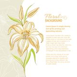 Lily flower background. Vector illustration Stock Image