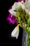 Lily flower bouquet in vase on black background Royalty Free Stock Photography