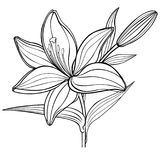 A lily flower with a bud. black and white. linear drawing. coloring book for adult and older children stock illustration