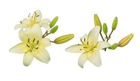 Lily Flower Cluster Foto de archivo