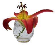 Lily flower in a crystal glass Stock Images