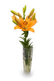 Lily flower in a crystal vase Stock Photography