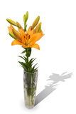 Lily flower in a crystal vase with shadow Stock Photo