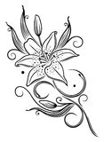 Lily, flower. Filigree lily tendril, black vector art Royalty Free Stock Photography