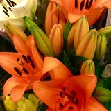 Lily flower. Flowers in the bunch on Florist Royalty Free Stock Images