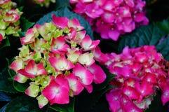 Lily, flower, garden, flower shop, sale, flower petals, plant, natural, landscape, tourism, background Royalty Free Stock Photos