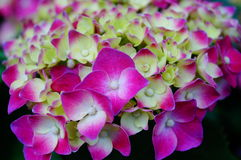 Lily, flower, garden, flower shop, sale, flower petals, plant, natural, landscape, tourism, background Stock Photography