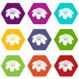 Lily flower icons set 9 vector. Lily flower icons 9 set coloful isolated on white for web Stock Photo