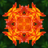 Lily flower mandala Royalty Free Stock Images