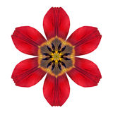Lily Flower Mandala Isolated kaléïdoscopique rouge sur le blanc Images libres de droits